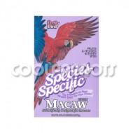 Pretty bird especial guacamayos