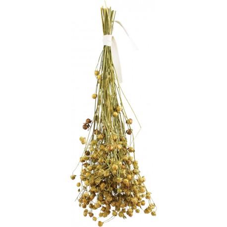Ramillete de semillas de lino