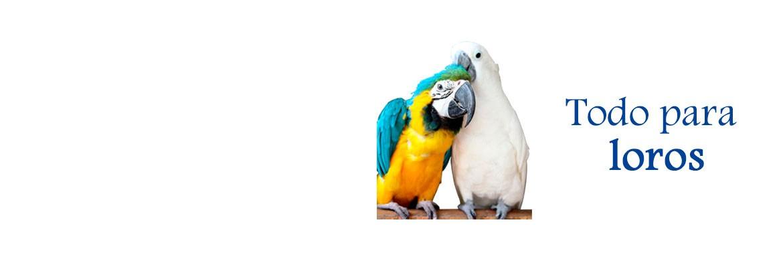 cool-parrots